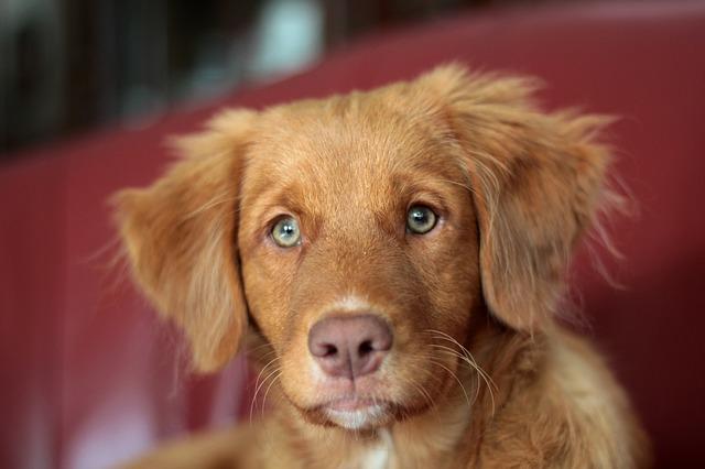 A kutyusok kedvence