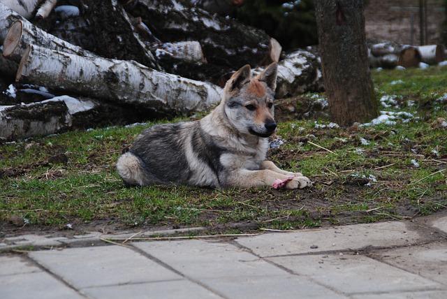 Különleges kutyatápok